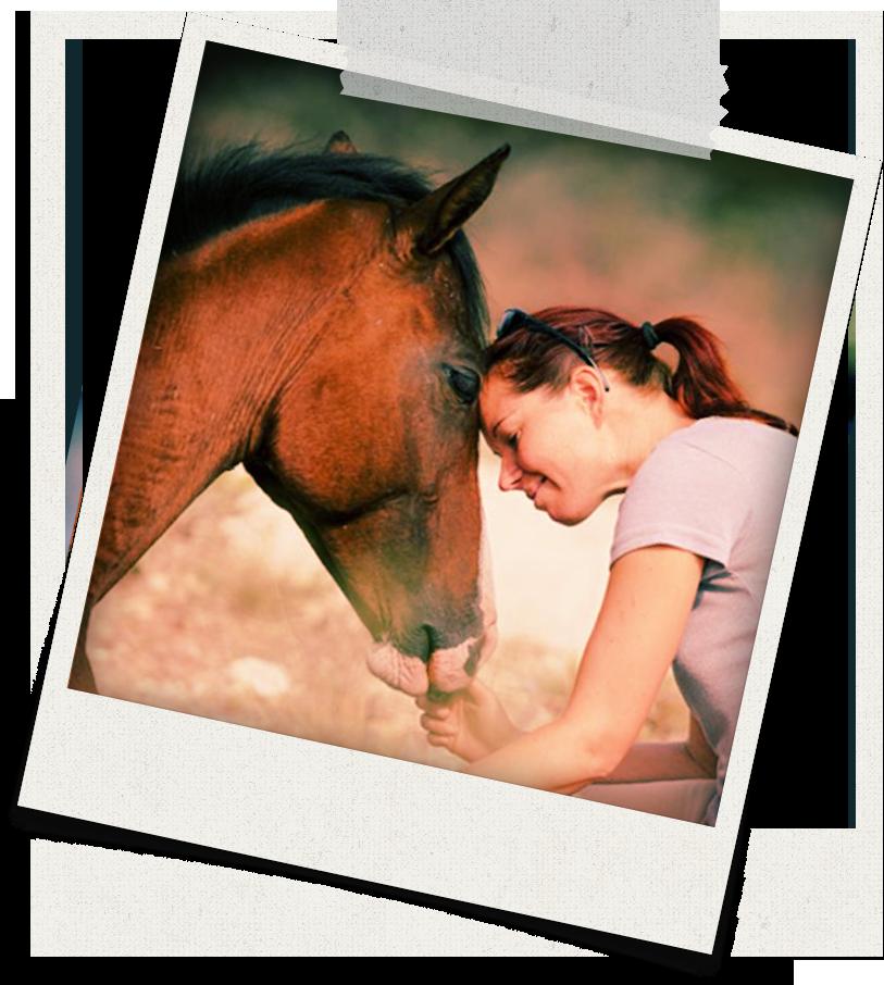 Werden Sie selbständiger Pferdetrainer - ab Frühjahr 2019