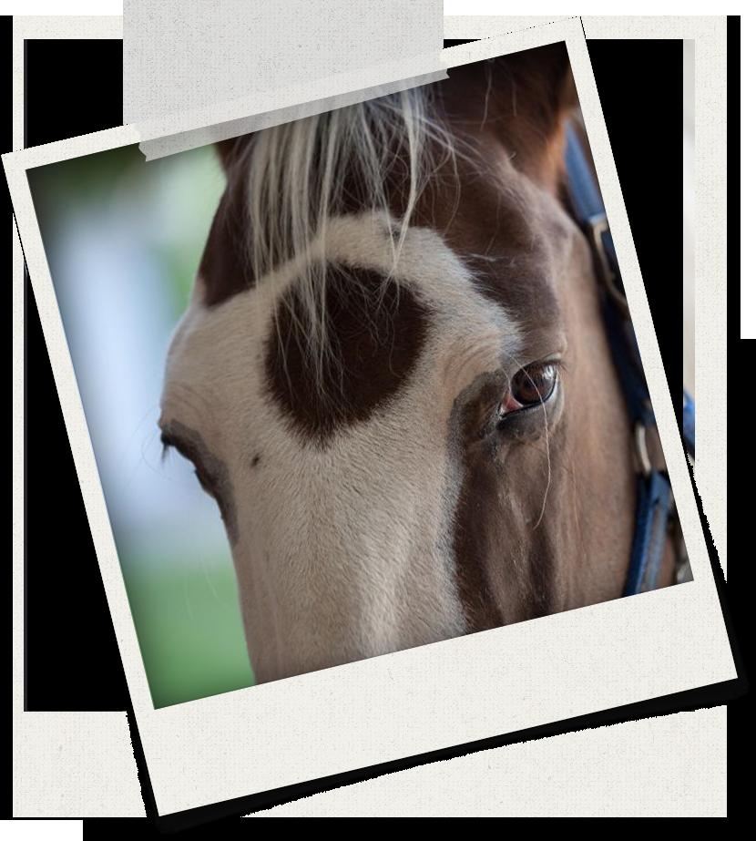 Sandra Schneiders Akademie für ganzheitliches Pferdetraining