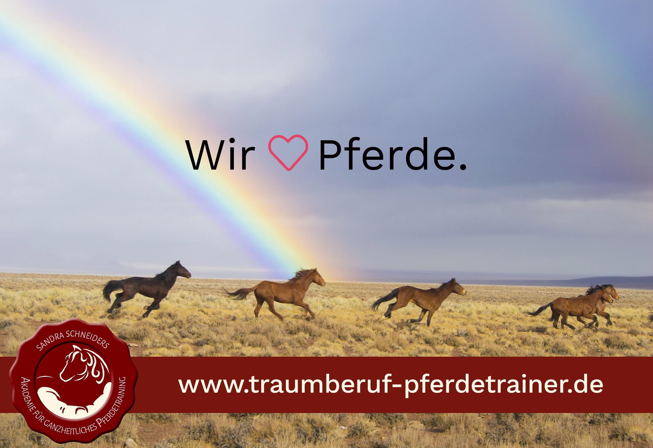 Traumberuf Pferdetrainer — Sandra Schneiders Akademie für ...